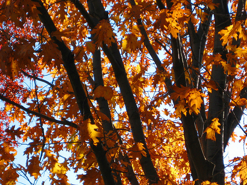 12 Fun Facts about Fall